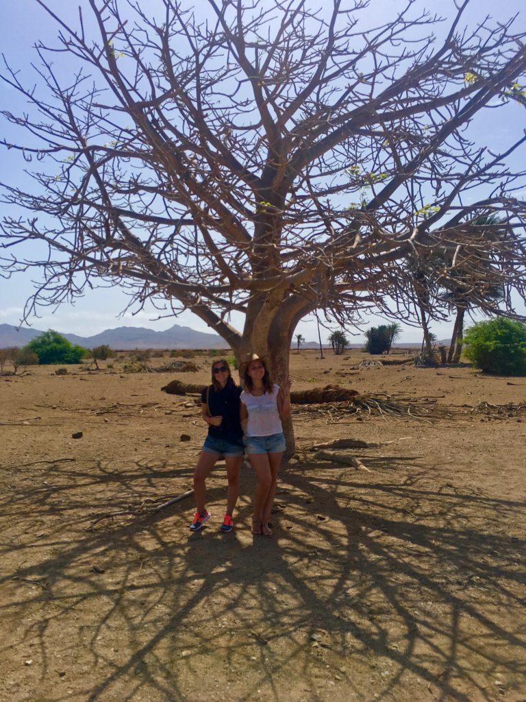 capvert-boavista-baobab