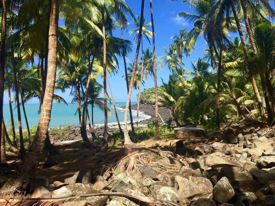 ilesdusalut-cocotiers