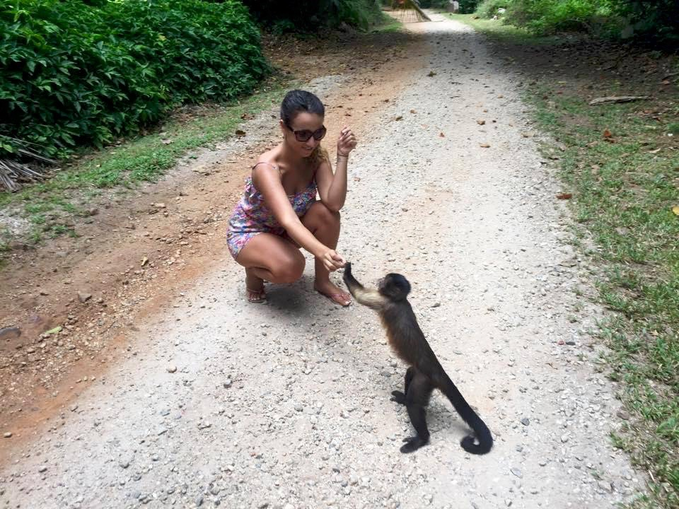 ilesdusalut-singe
